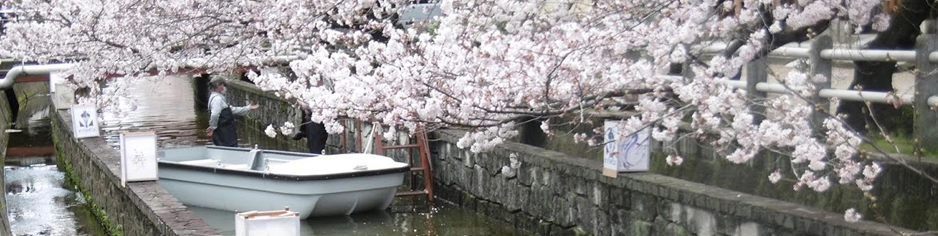 2016春長瀬川の桜