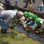 園児たちと「河内木綿の苗植え」をしました