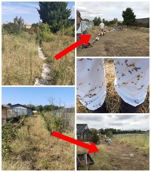 10/12 農園の草刈りをしました